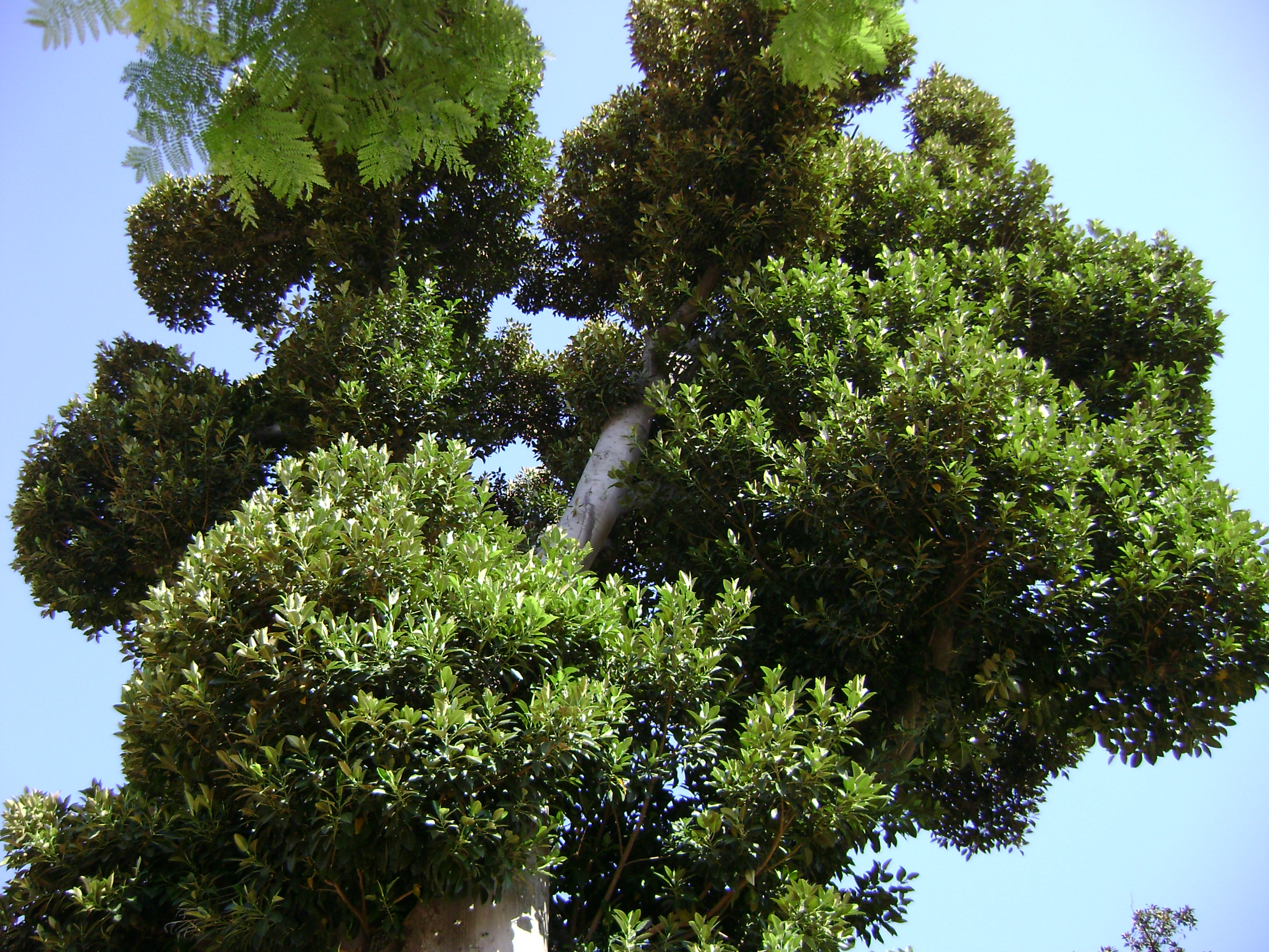 Kurs Rośliny i Drzewa